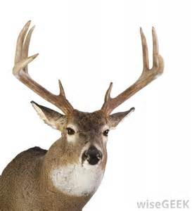 can deer antler make your hard picture 1