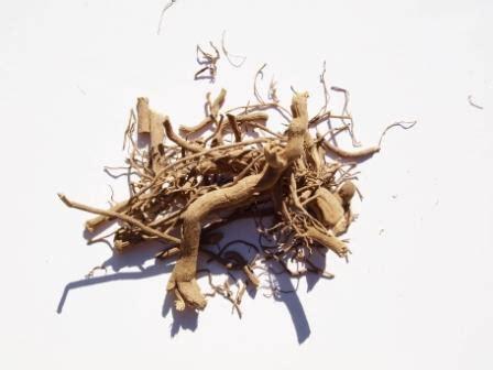 kava tea for hemorrhoids picture 17
