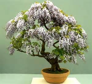 blue tree bark tea picture 10