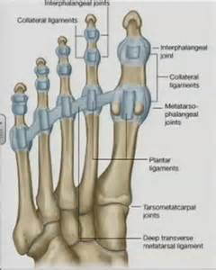 injury to mtp joint of fifth metatarsal picture 27