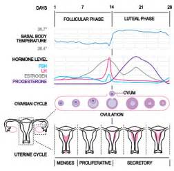 bladder infection 2 weeks after period am i picture 9