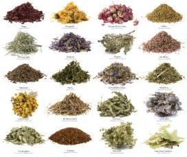 herpes in herbal +urdu picture 15