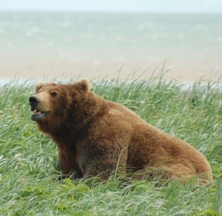 bears men blogs picture 15