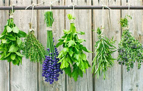 dried herbs to put in neck warmers picture 9