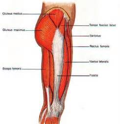 injury to the hip abductor muscle picture 9