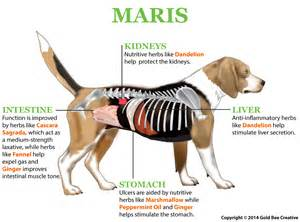 canine intestinal pain picture 11