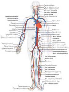 medical facts and diagram of how the blood picture 10