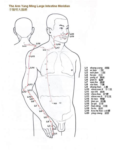 accupressure point for liver picture 18