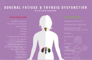 fibromyalgia thyroid picture 2