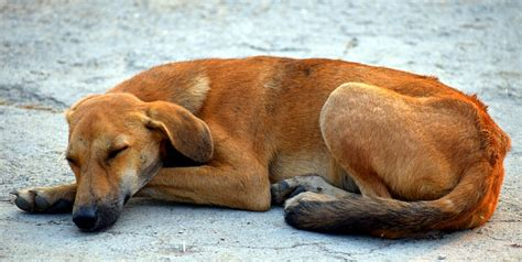 canine insomnia picture 7