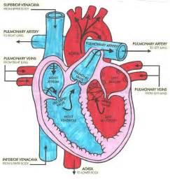 heart diagram blood flow picture 5