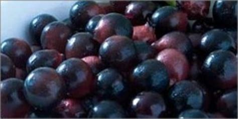acai berries study cancer cells picture 13