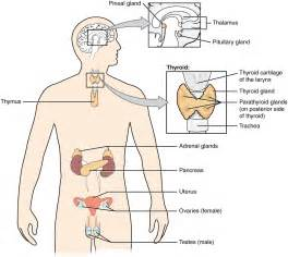 endocrinology of aging female body picture 15