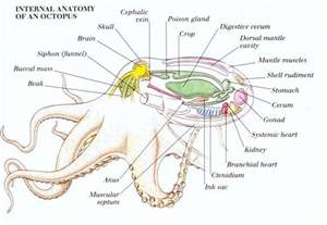 crab digestion picture 9