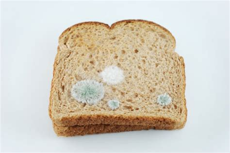 fungus on bread picture 7