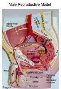 abdominal exam female picture 1