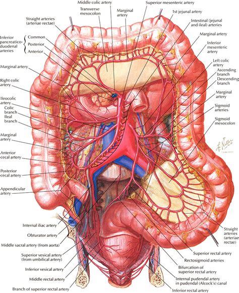 colon chart picture 11