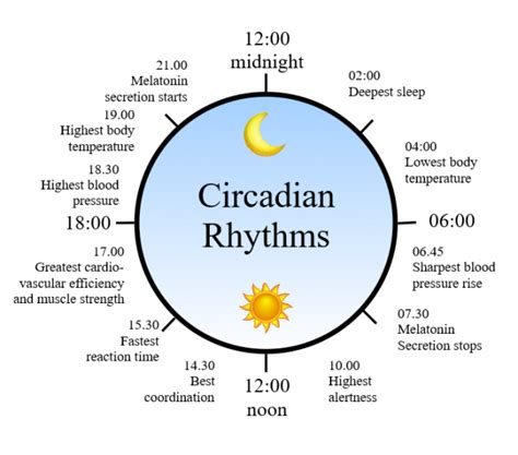 circadian sleep rhythm picture 6