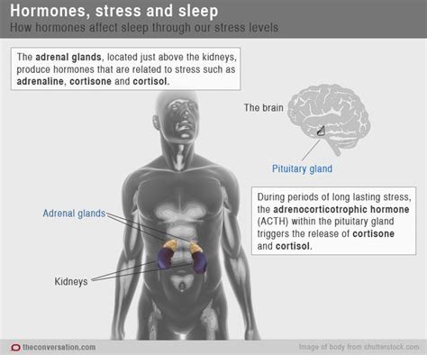 bioidentical hrt helping insomnia picture 7