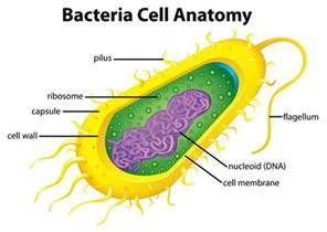 Bacterial cell image picture 2