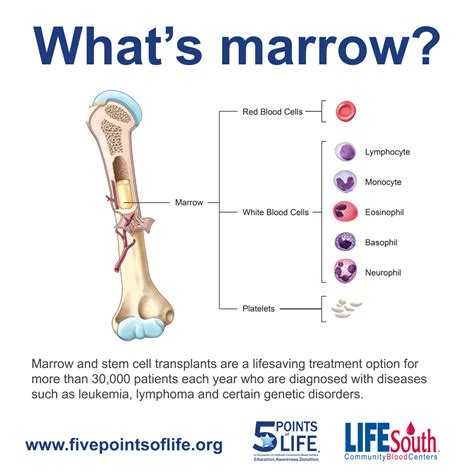 what is bone & bone marrow homeopathic used picture 6