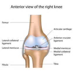 knee keep slipping out of joint picture 5