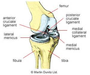 surgery minuscus tear knee joint picture 6