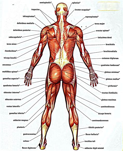 muscle pain picture 7