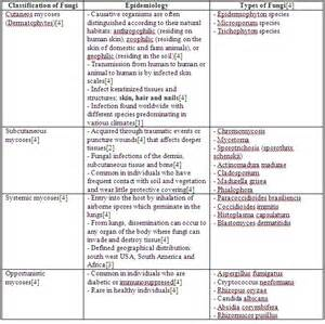 fungi classification picture 14