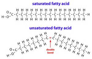 saturated fat picture 1