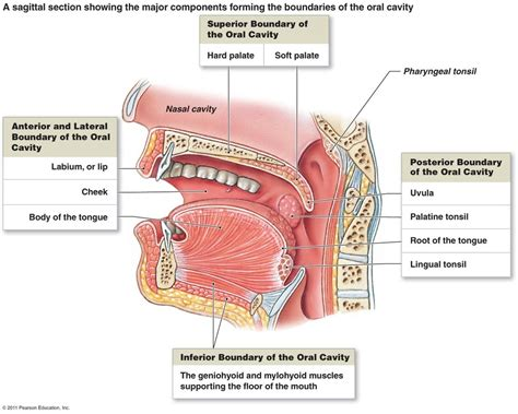 what systems does the liver work with picture 1