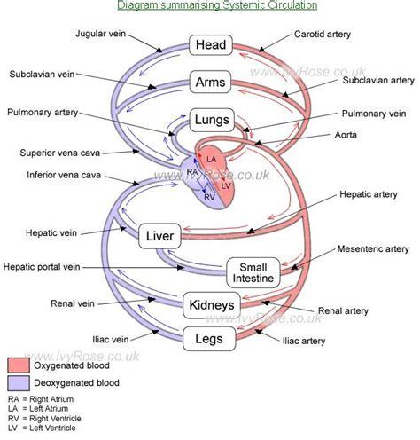 Vessel circulation picture 6