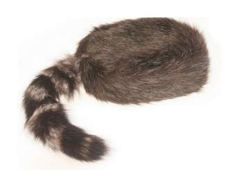 coon skin cap picture 14