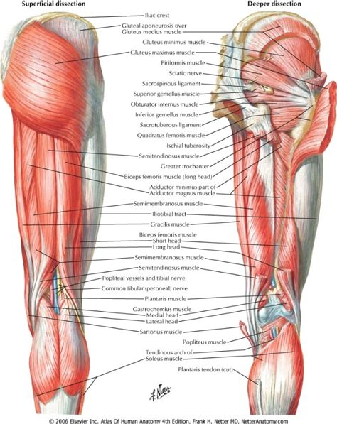hamstring muscle injuries picture 14