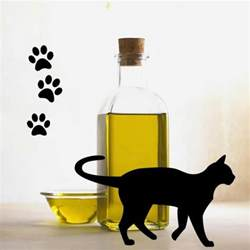 olive oil for cats benefits picture 1