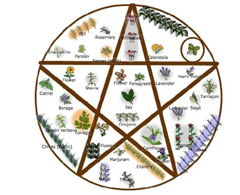 wiccan herbs and their meanings picture 17