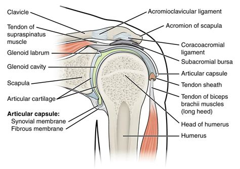 shoulder joint pain picture 2