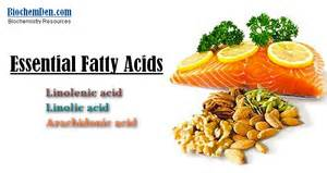 essential fatty acids and libido picture 5