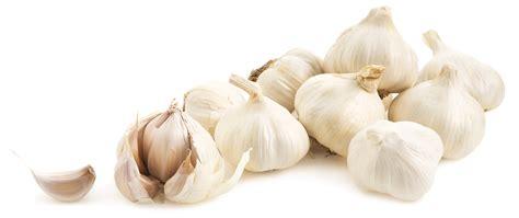 benefits garlic testosterone picture 9