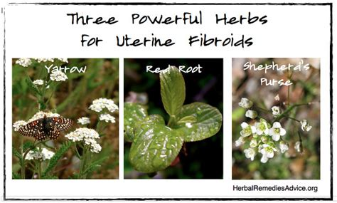 herbal remedies for fibroids picture 7