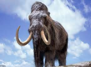 mammoth h picture 14
