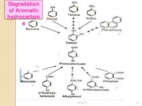 digestion cycle picture 11