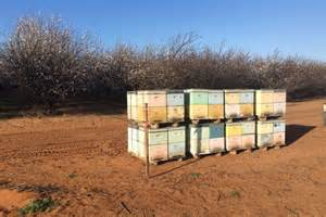 bee hives australia picture 5