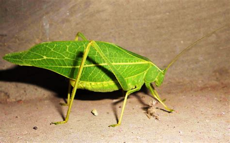 insect picture 17