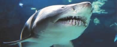 aquarium teeth picture 11