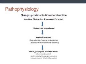 bowel loop picture 9