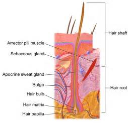 deposits on the hair shaft picture 17