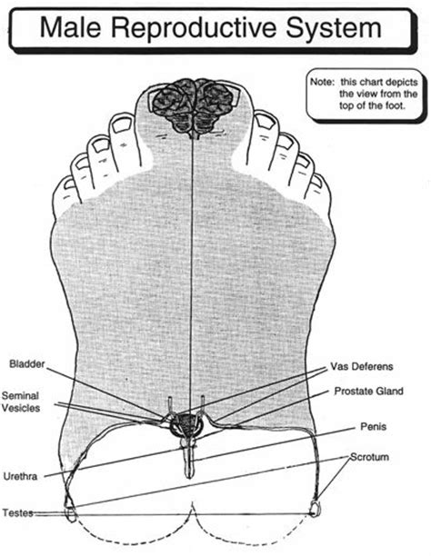 foot reflexology for sexual enhancement for men picture 5
