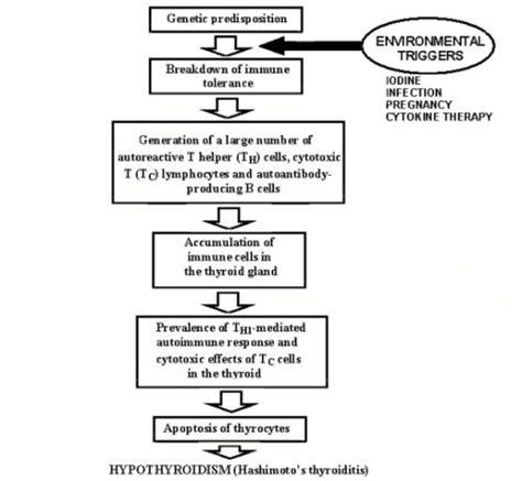 autoimmune thyroid dis picture 6
