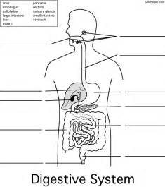 digestive organ system picture 3
